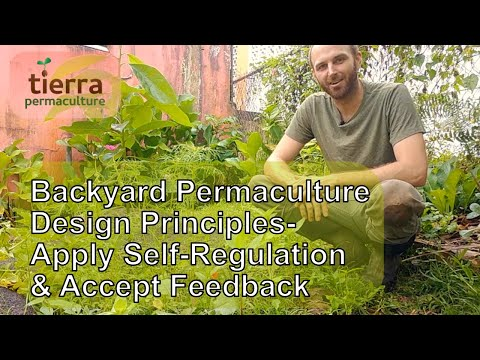 Backyard Permaculture Design Principles | Apply Self-Regulation and Accept Feedback