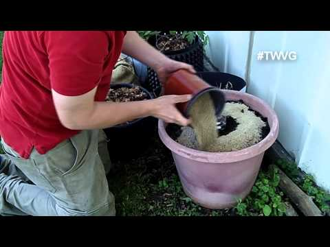 Growing Zucchini in Containers