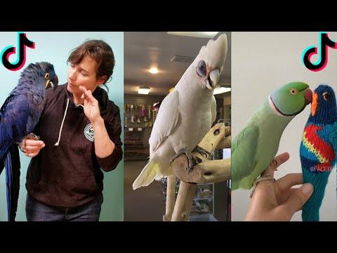BIRDS TALKING LIKE HUMANS