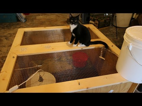 Best Chick Brooder ~ Build it in 30 mins for $30 ~ Keep your Chicks safe from your Cat
