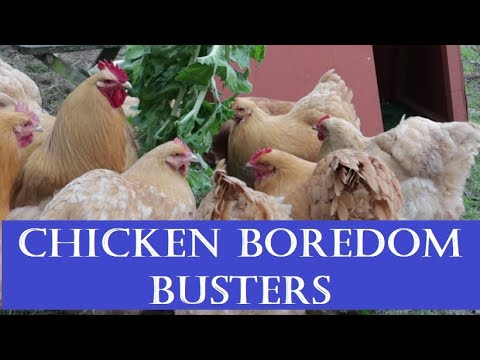 Chicken Boredom Busters