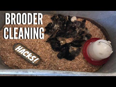 Easy Chicken Brooder Cleaning Hacks
