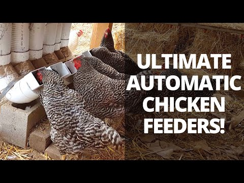 Automatic Chicken Feeders   Save Time Raising Chickens