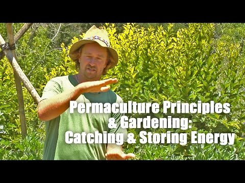 Permaculture Principles - Catching and Storing Energy