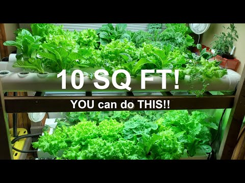 Home Hydroponic Farm: Hundreds of Pounds of Produce in 10 Sq Ft!