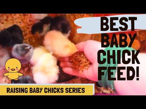 We're feeding brand new chicks! (Best feeds for baby chicks)