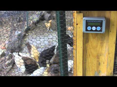 Chicken Guard Review Best Automatic door on the market - Light sensor / Battery powered
