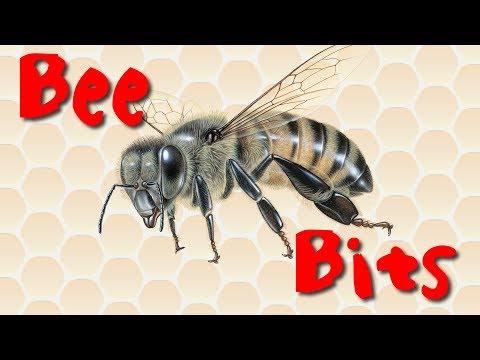 Bee Bits
