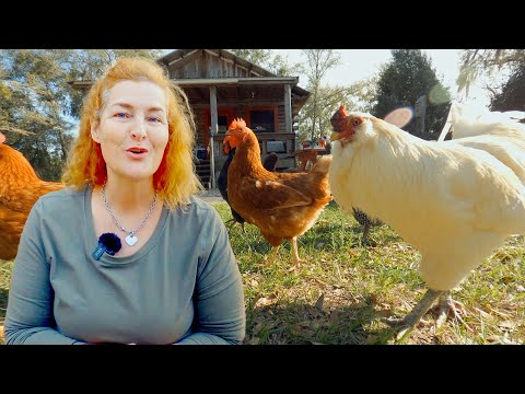 How To Make My Chickens Lay More Eggs