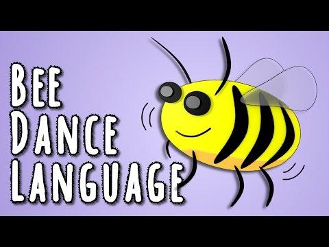 Bee Dance Language - the linguistics behind animal language