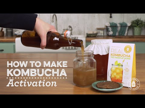How to Activate a Dehydrated Kombucha Scoby