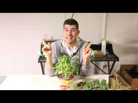 The Best Plant to Propagate to Start a Business or Get Tons of Free Plants!