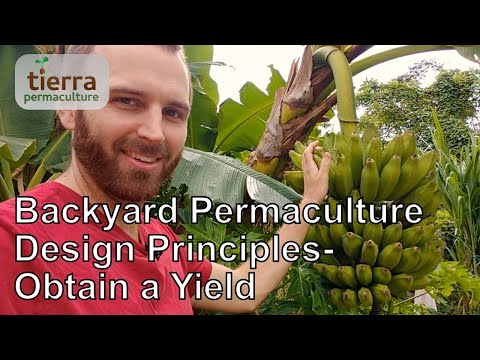 Backyard Permaculture Design Principles | Obtain a Yield