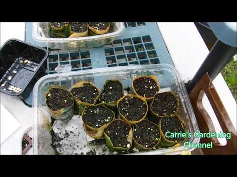 how to grow ornamental gourds from seed, how to start ornamental gourds from seed
