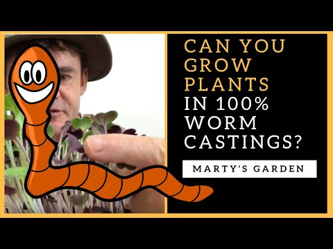 Can You Grow Plants in 100% Worm Castings?