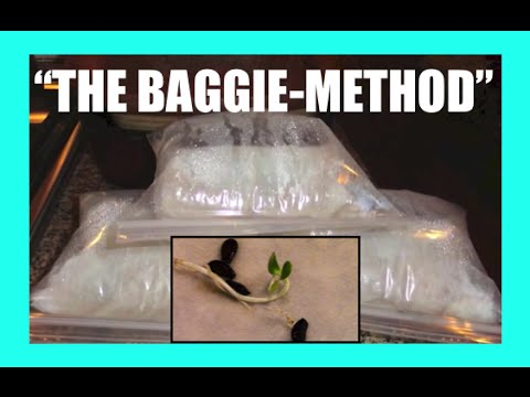 The Baggie Method: Fast Seed Germination