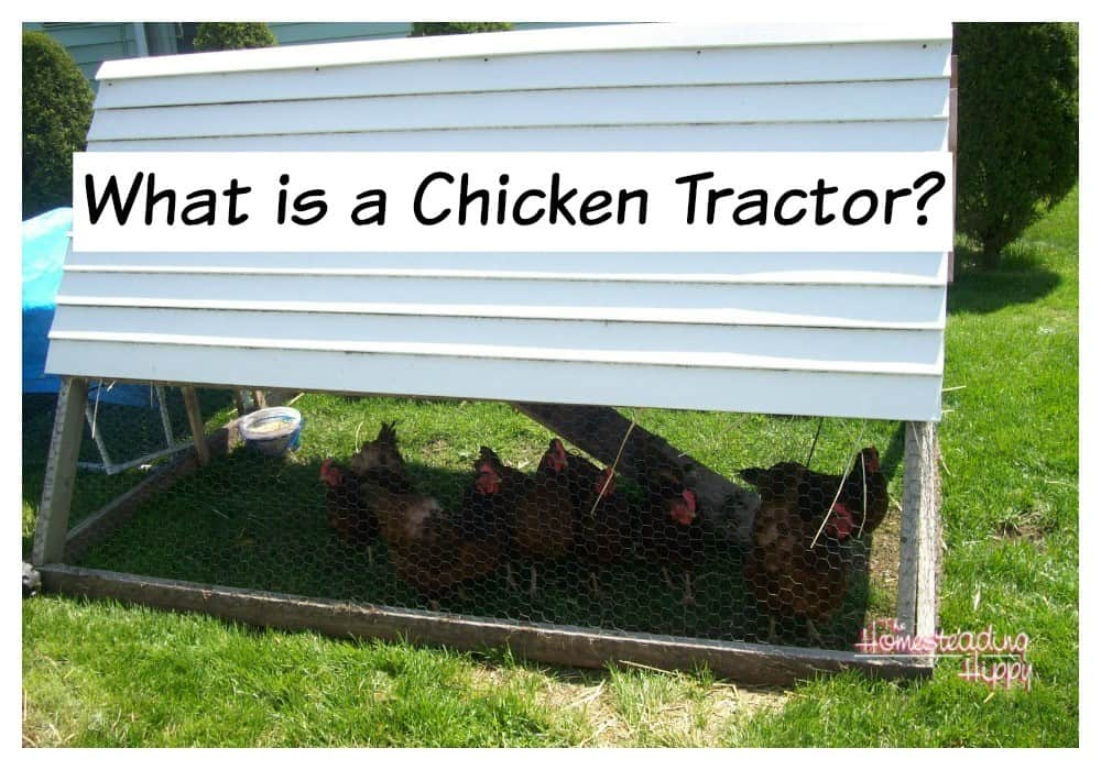 Got a small flock? Try a chicken tractor; easily portable and can be good protection from predators ~The Homesteading Hippy #homesteadhippy #fromthefarm #chickens #theurbanchicken