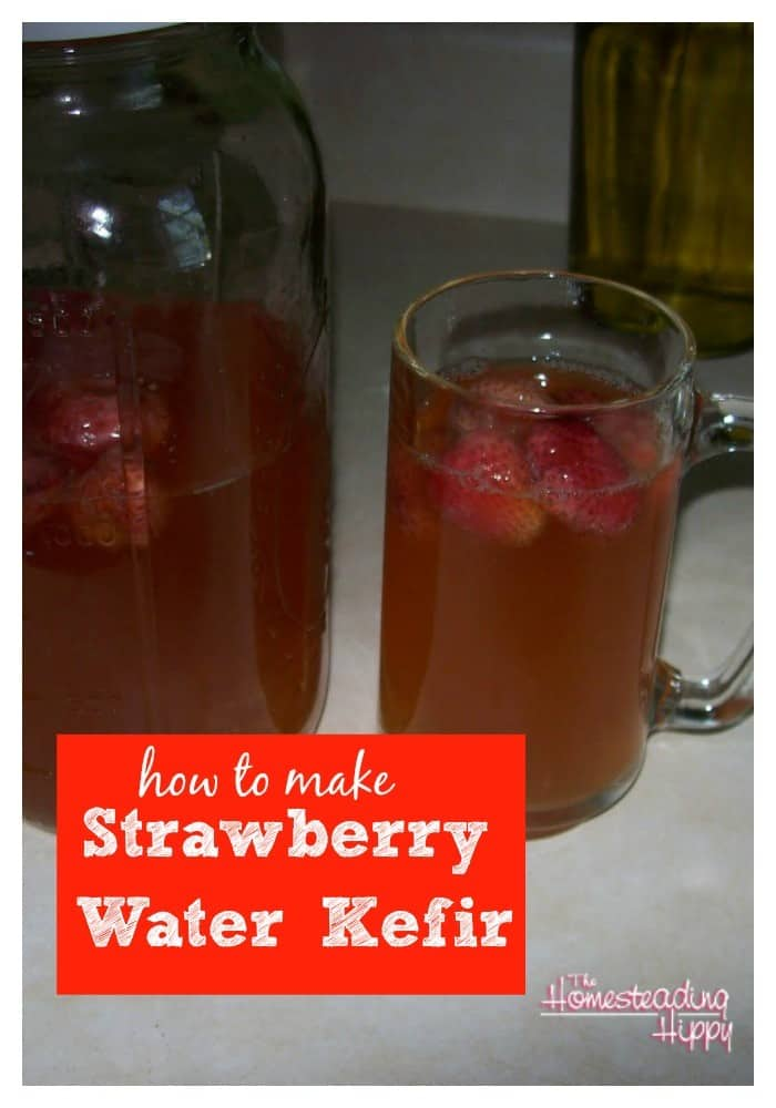 how-to-make-strawberry-water-kefir-The Homesteading Hippy