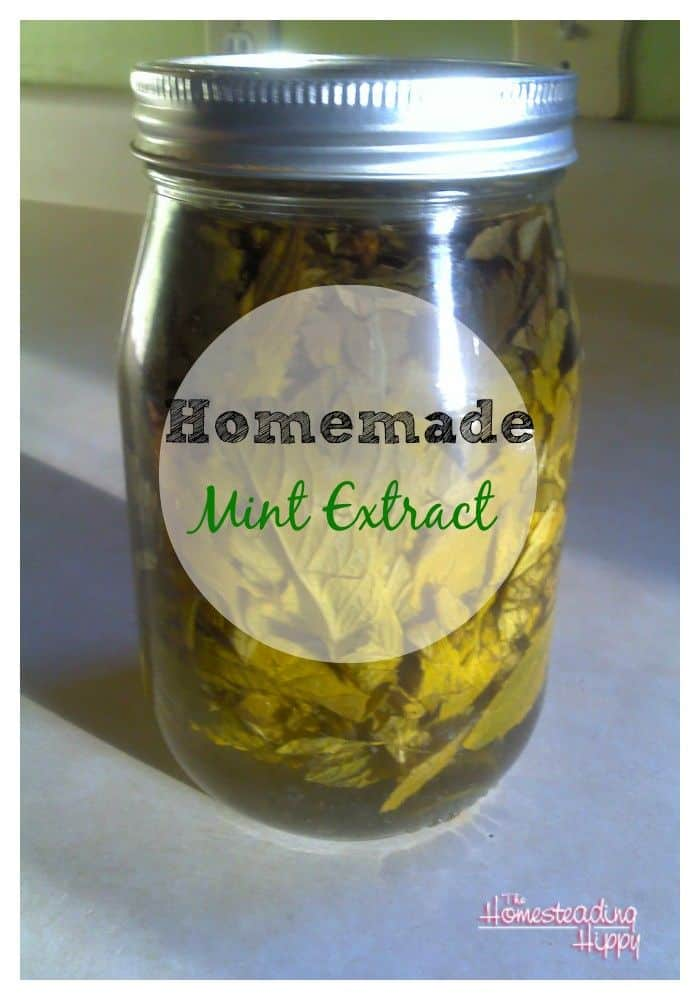 homemade mint extract pin