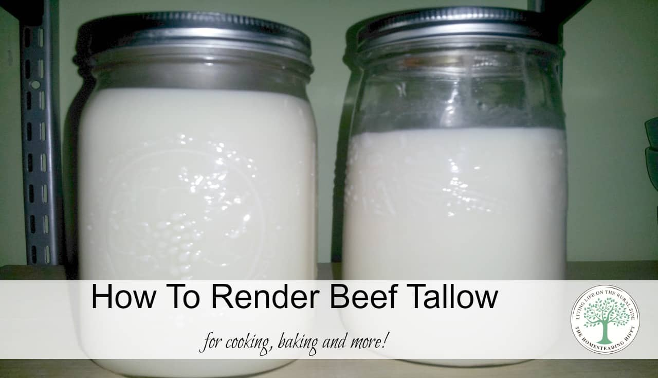 Learn how to render beef fat into a creamy, solid, healthy traditional fat perfect for frying, baking, and more! The HomesteadingHippy