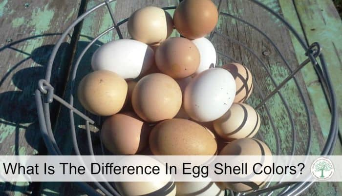 egg shell colors post