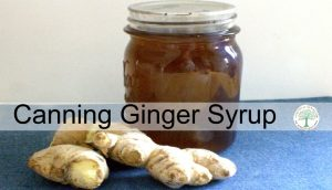 Ginger Syrup-How To Make It And Can It