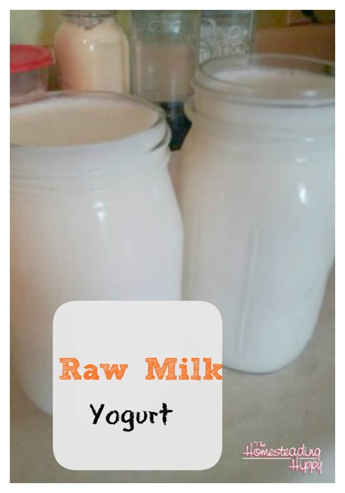raw milk yogurt~The Homesteading Hippy