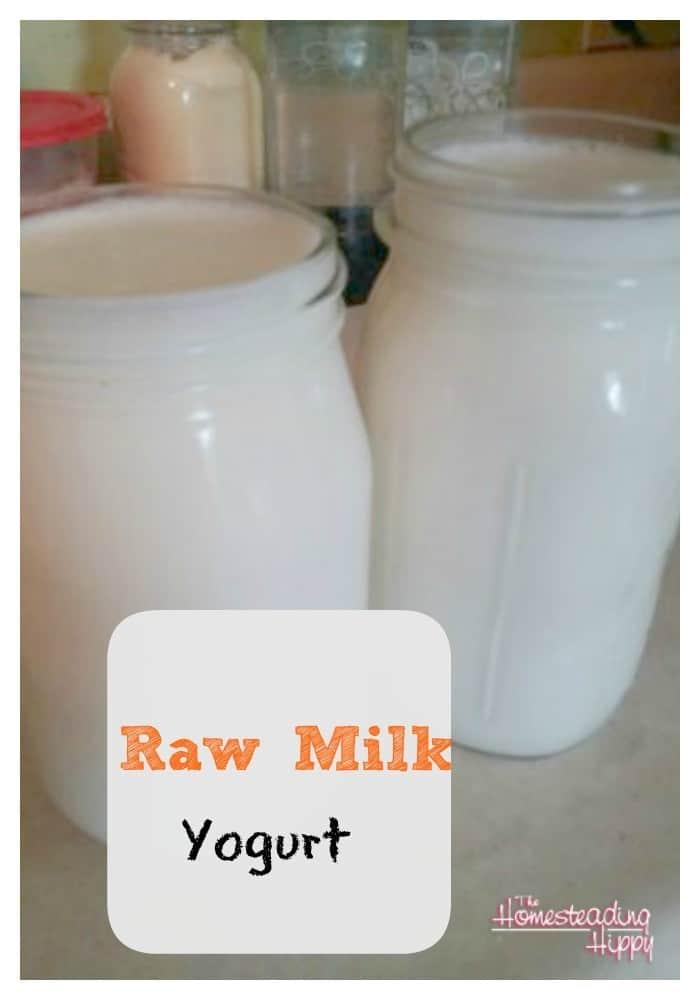 Homemade Raw Milk Yogurt-Thick, Creamy, Delicious!
