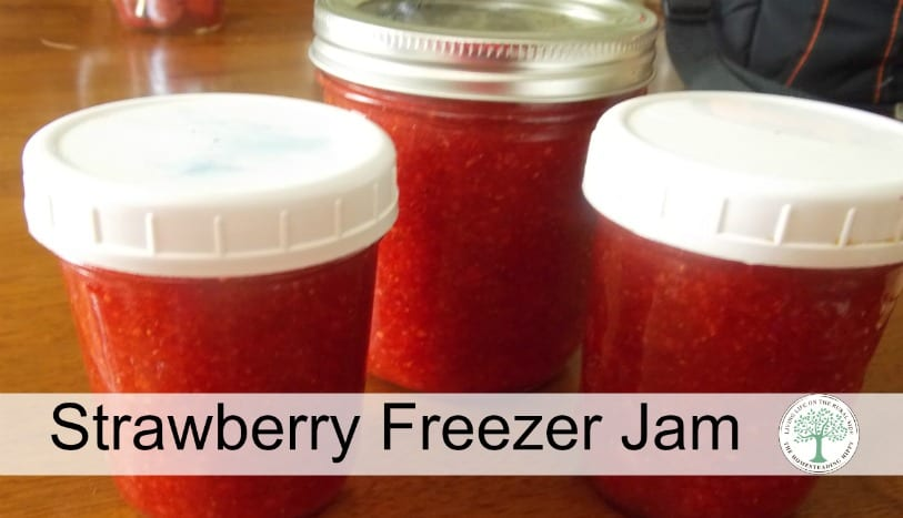 When strawberries are in season, this strawbery freezer jam is a MUST make! The Homesteading Hippy