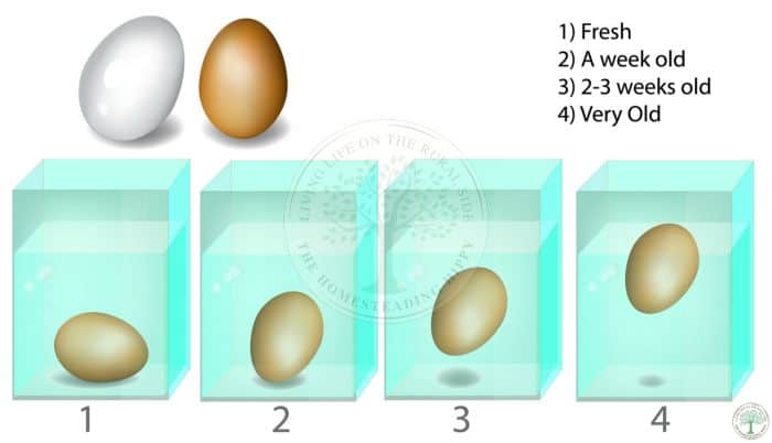 underwater egg test