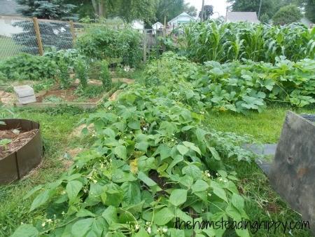 gardenglance