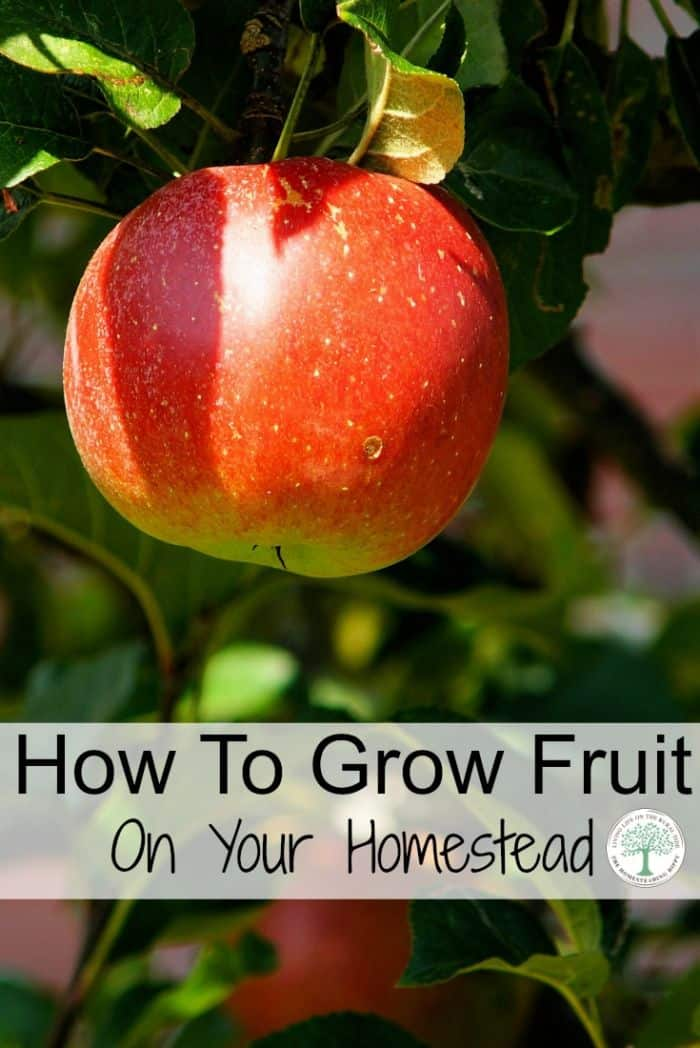 growing fruit pinterest
