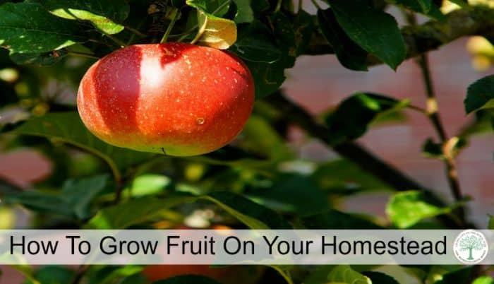 growing fruit post