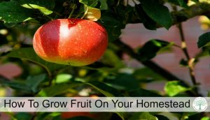 How to Add Fruit Trees On Your Homestead