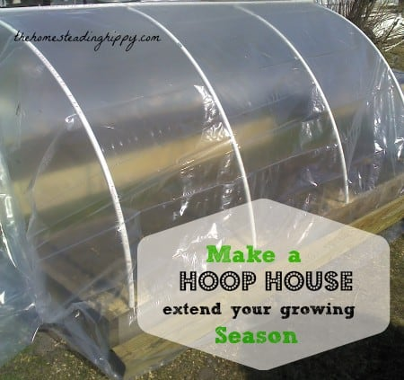Extend your growing season easily by 4-6 with this DIY hoop house! The Homesteading Hippy