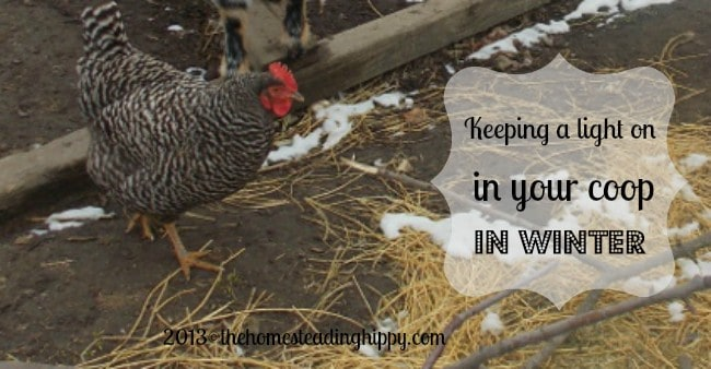 should you keep lights on in a chicken coop over winter?