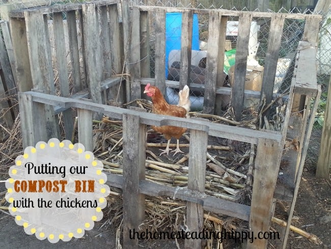 putting our compost bin in with our chickens