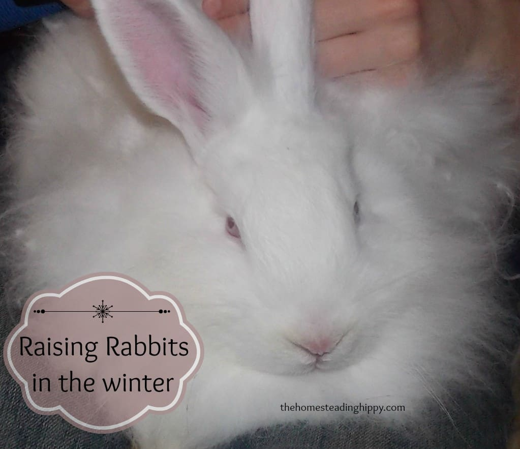 Raising Rabbits in the Winter