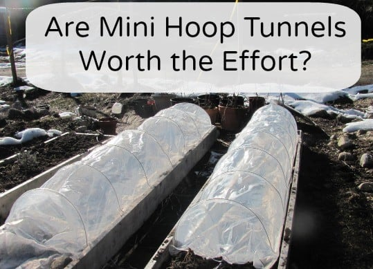 mini hoop tunnels are they worth the effort @thehomesteadinghippy