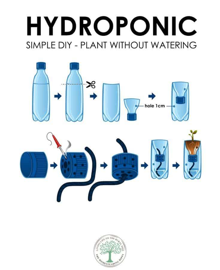 hydroponic plan