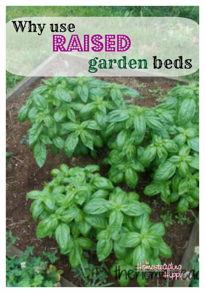 why use raised garden beds ~The Homesteading Hippy