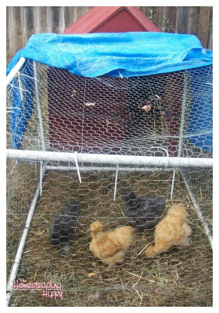 diy dog house into a chicken coop~The Homesteading Hippy