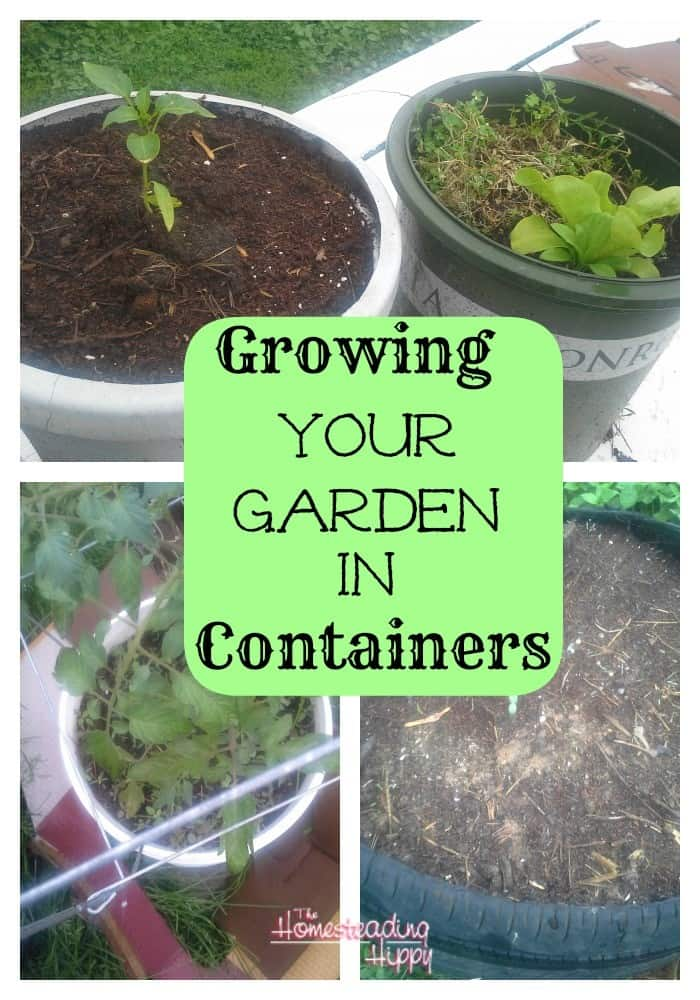 growing-your-garden-in-containers~TheHomesteadingHippy