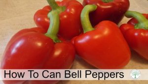 How to Can Bell Peppers