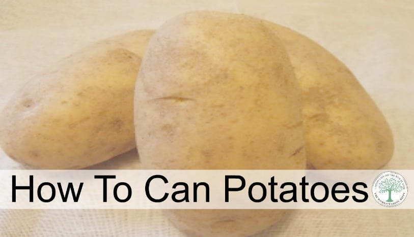 Learn how to can your garden potatoes for storing without a root cellar! Enjoy them all year long with just a little bit of effort now!