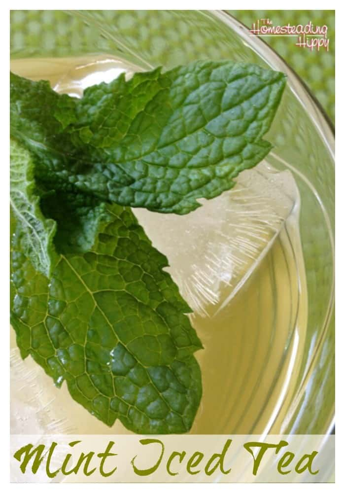refreshing mint iced tea made with mint leaves~The Homesteading Hippy