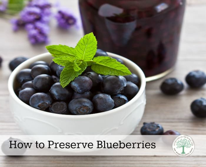 Blueberries are in season a short time, sadly. From canning to freezing, to dehydrating, you are sure to find a method to preserve blueberries that works for you! The Homesteading HIppy