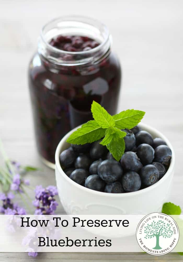 With blueberries in short season, here's some handy tips to get the most out of the harvest for all year long enjoyment! The Homesteading Hippy #homesteadhippy