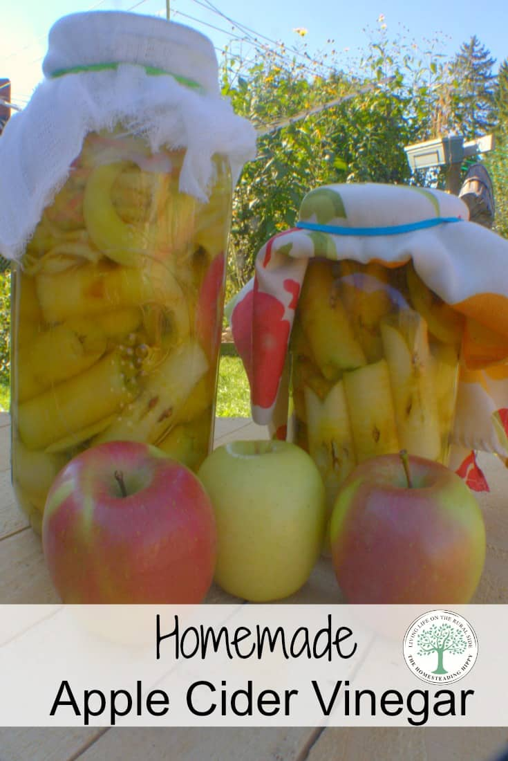 Apple Cider Vinegar has wonderful health benefits, as well as many beauty uses. Learn to make your own easily~The HomesteadingHippy #DIY #ACV #healthyfood #jerf #fermenting #foodie #makeyourown #apples #vinegar #livestrong #lowcarb #jerf