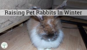 Raising Pet Rabbits In Winter-What You Need To Know